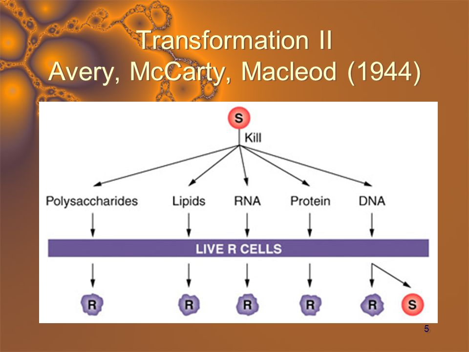 Transformation II Avery, McCarty, Macleod (1944)