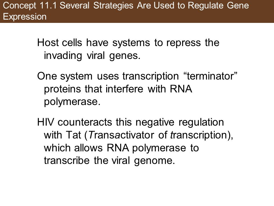 Concept 11.1 Several Strategies Are Used to Regulate Gene Expression
