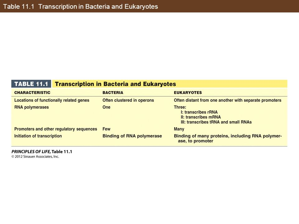 Table 11.1 Transcription in Bacteria and Eukaryotes