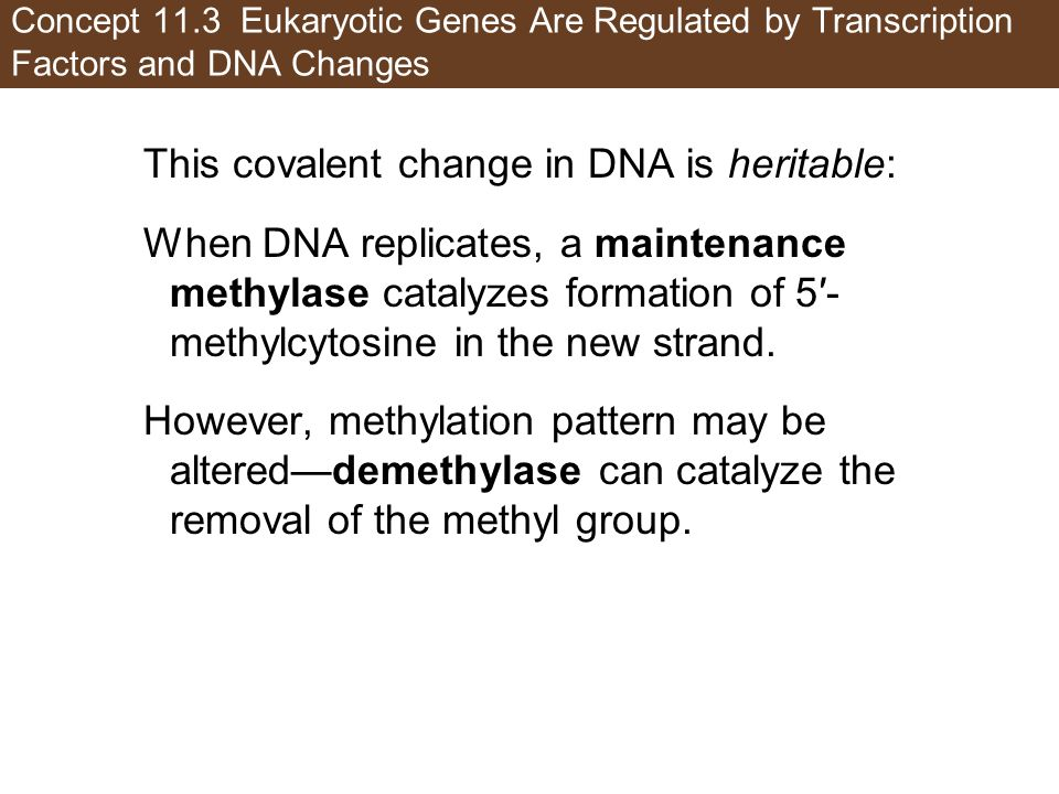 This covalent change in DNA is heritable: