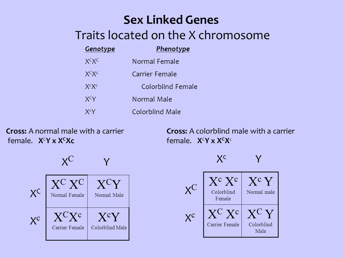 Sex Linked Genes Traits located on the X chromosome