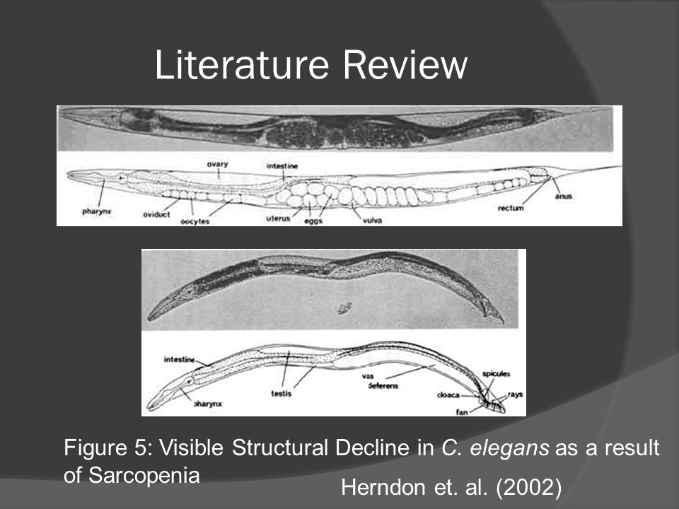 Literature Review Figure 5: Visible Structural Decline in C.