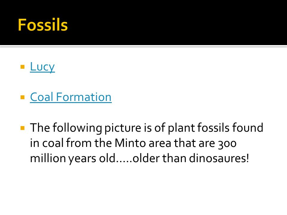 Fossils Lucy Coal Formation
