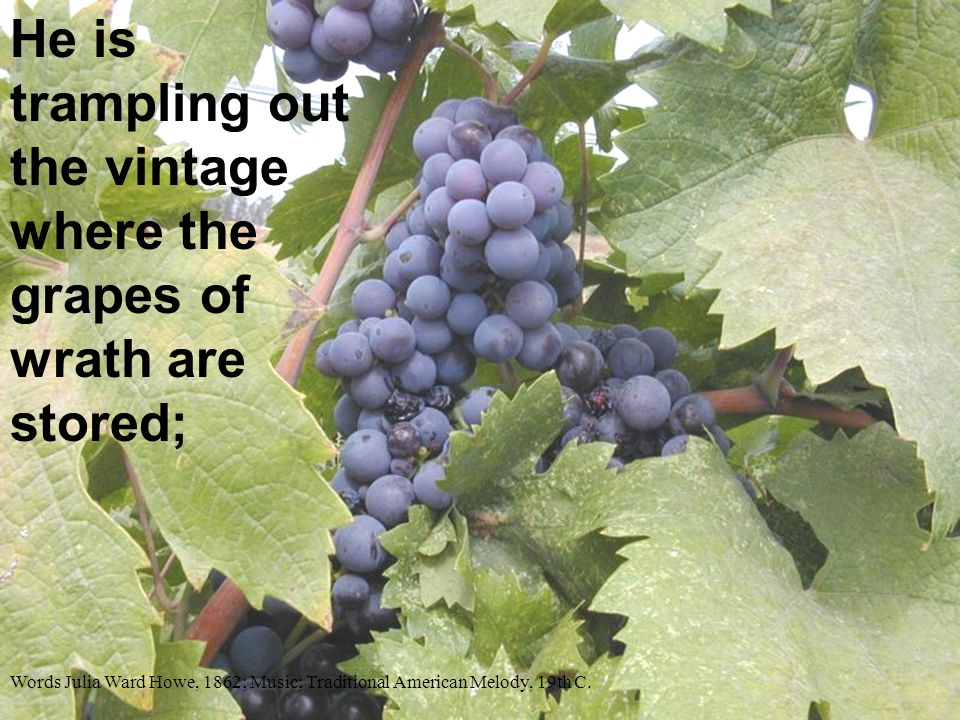 He is trampling out the vintage where the grapes of wrath are stored;