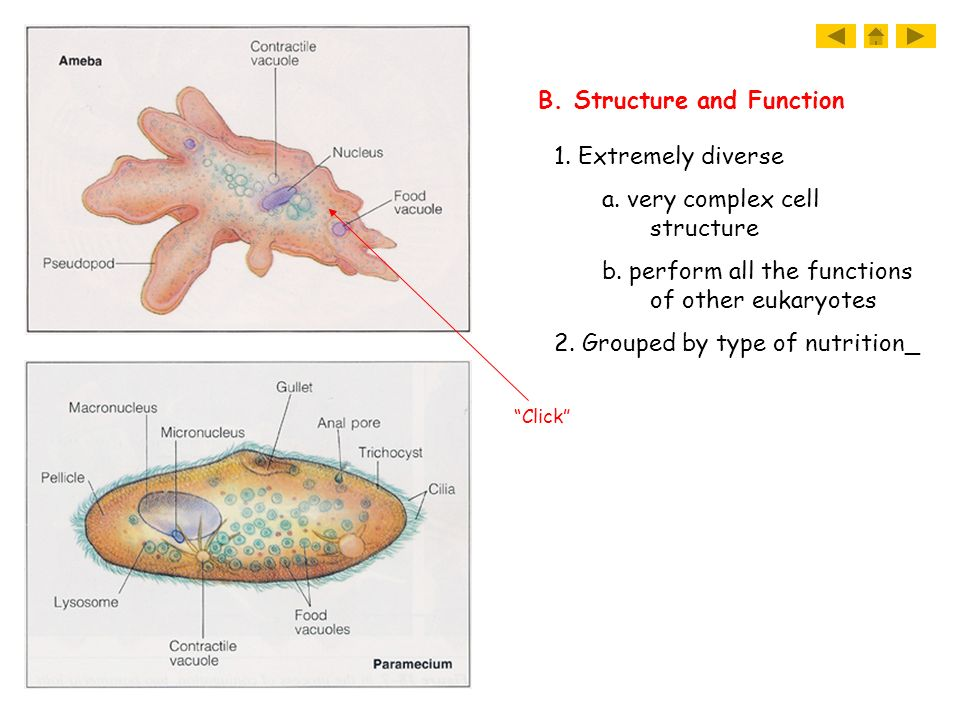 B. Structure and Function