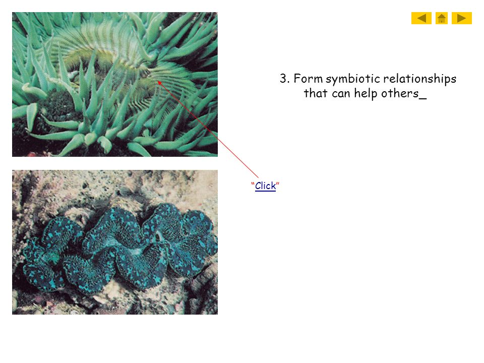 3. Form symbiotic relationships that can help others_