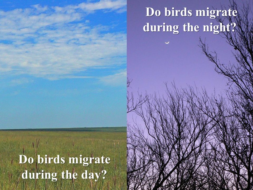 Do birds migrate during the night