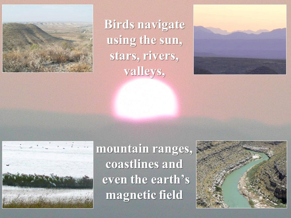 Birds navigate using the sun, stars, rivers, valleys, mountain ranges, coastlines and even the earth's magnetic field