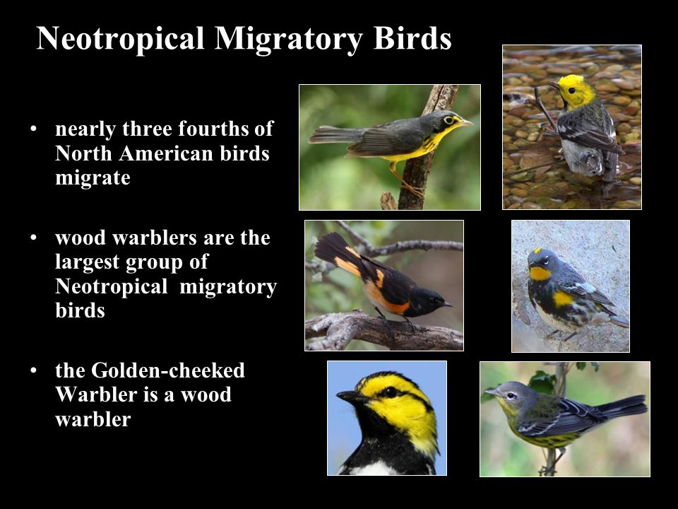 Neotropical Migratory Birds