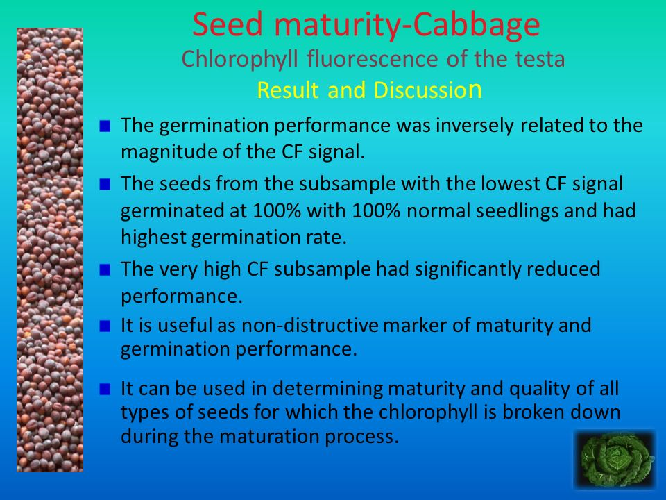 Seed maturity-Cabbage