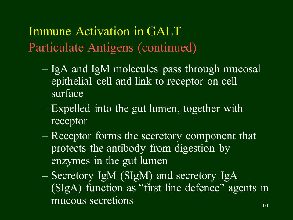 Immune Activation in GALT Particulate Antigens (continued)