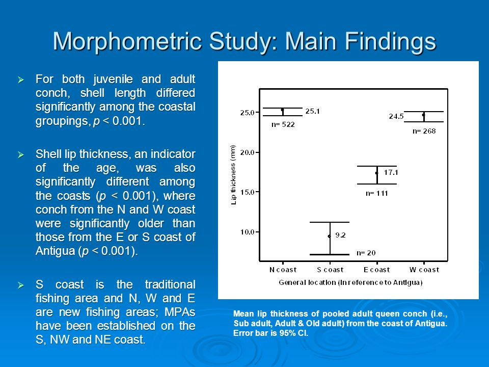 Morphometric Study: Main Findings