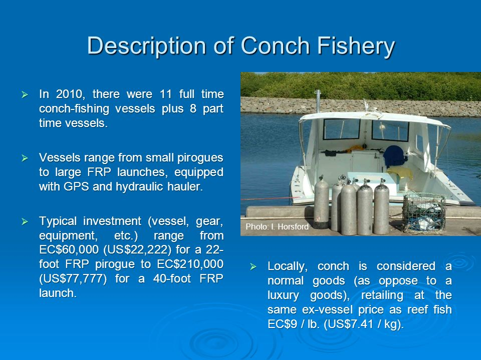Description of Conch Fishery