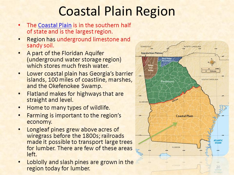 Coastal Plain Region The Coastal Plain is in the southern half of state and is the largest region. Region has underground limestone and sandy soil.