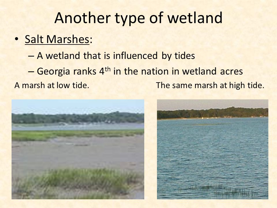 Another type of wetland