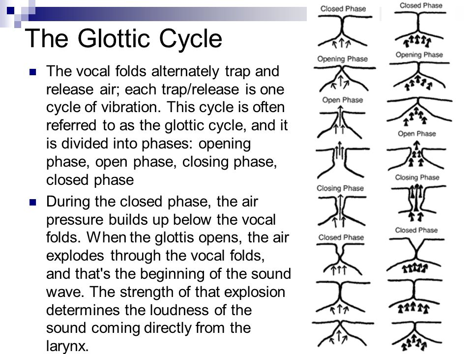 The Glottic Cycle