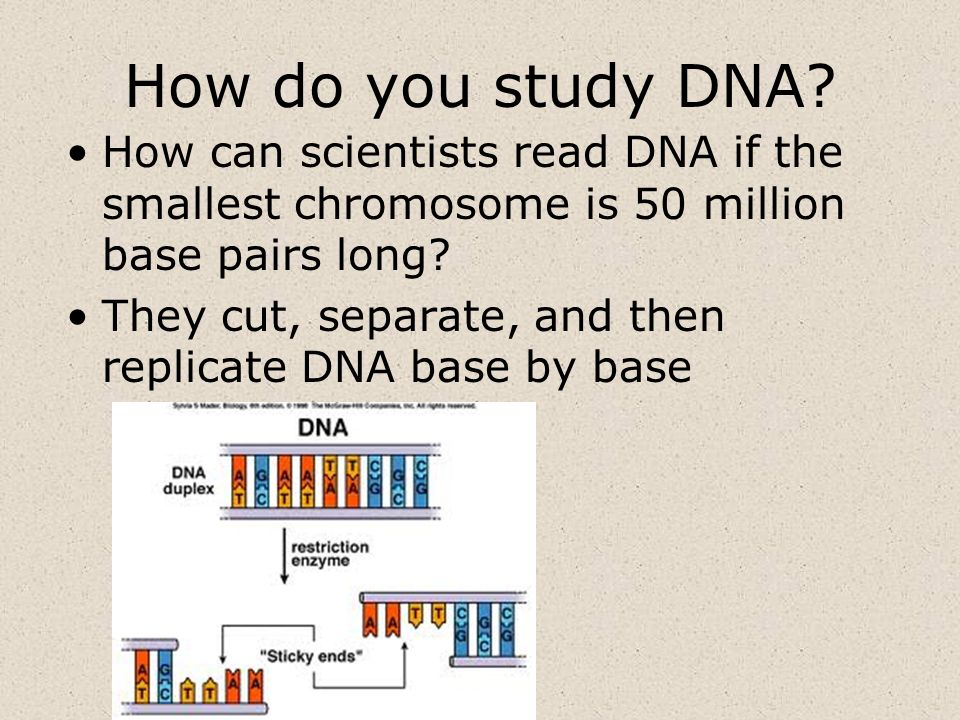 How do you study DNA How can scientists read DNA if the smallest chromosome is 50 million base pairs long