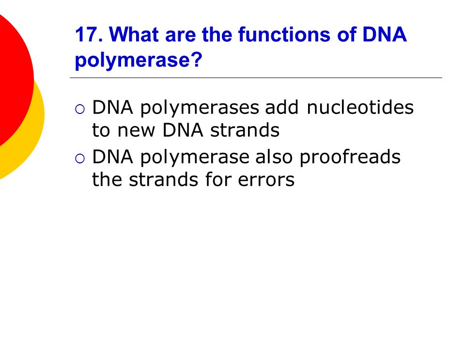 17. What are the functions of DNA polymerase