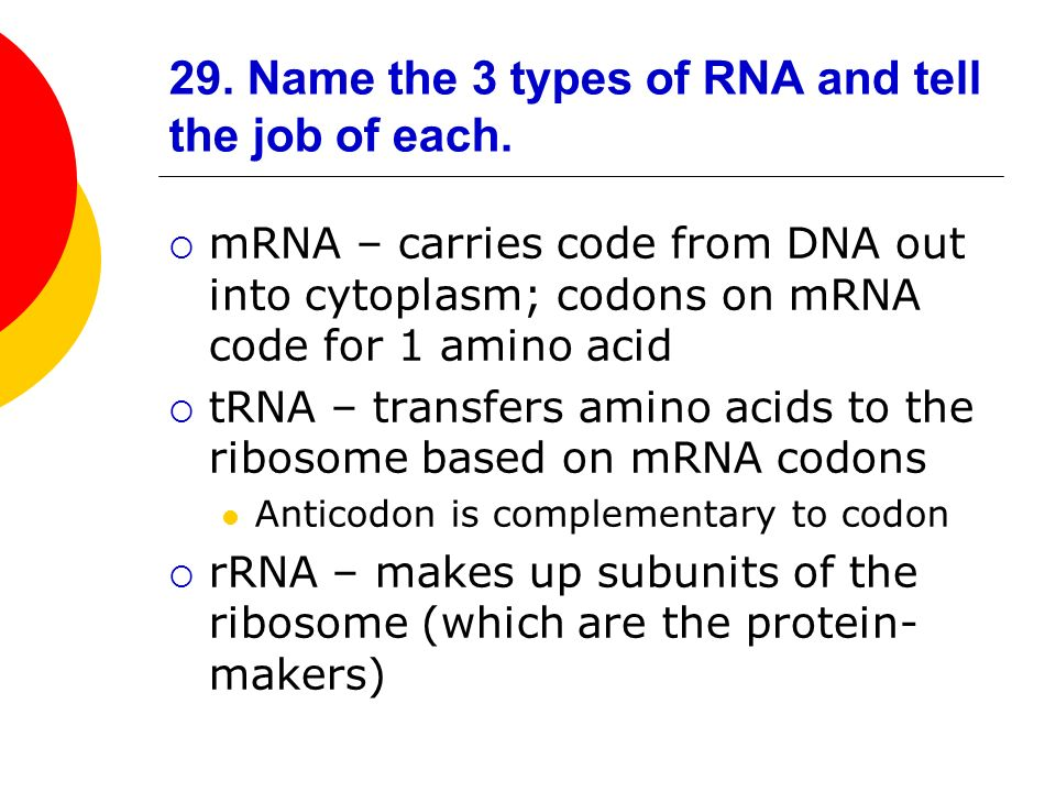 29. Name the 3 types of RNA and tell the job of each.