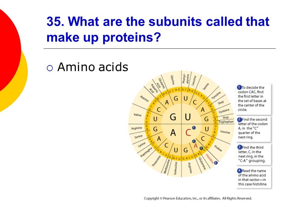 35. What are the subunits called that make up proteins
