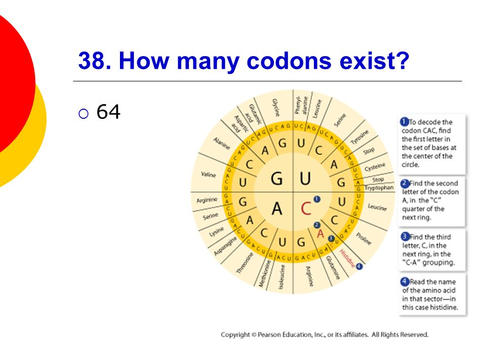 38. How many codons exist 64