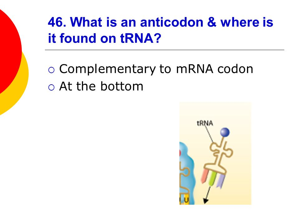 46. What is an anticodon & where is it found on tRNA