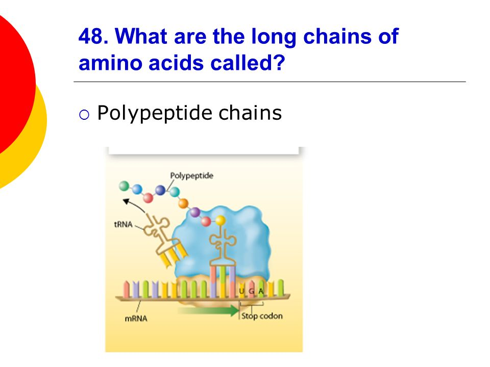 48. What are the long chains of amino acids called