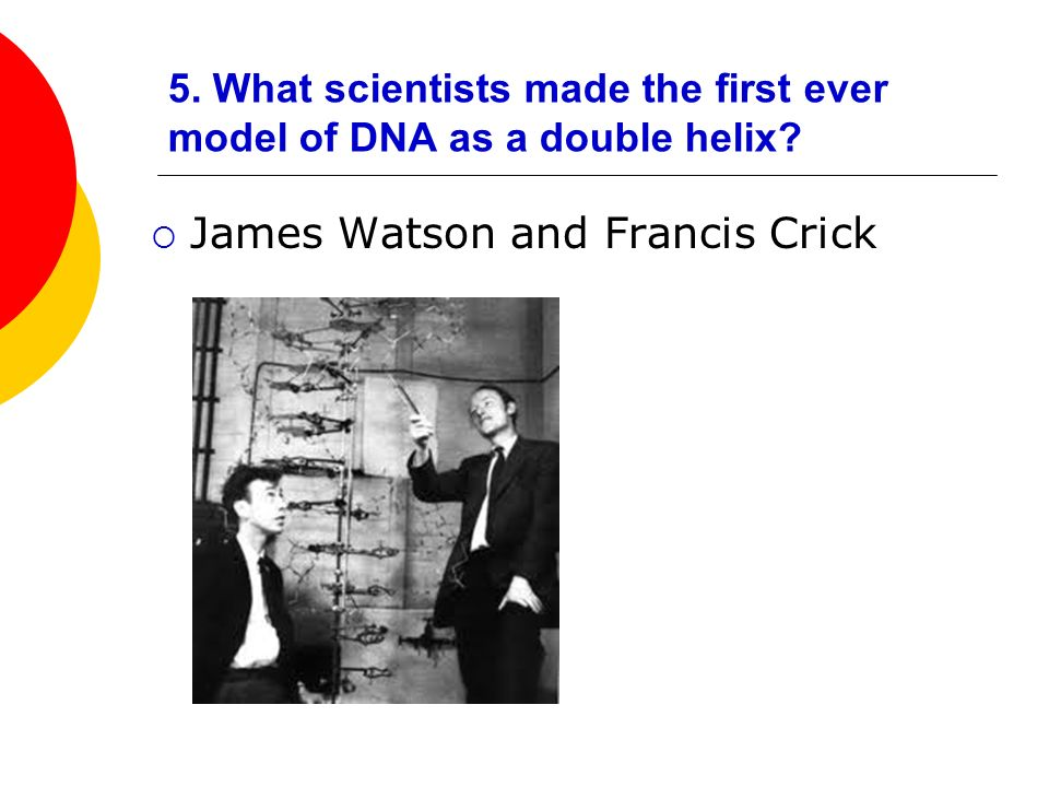 5. What scientists made the first ever model of DNA as a double helix