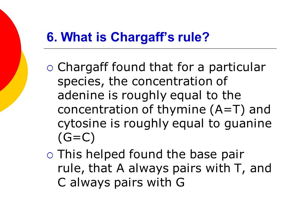 6. What is Chargaff's rule