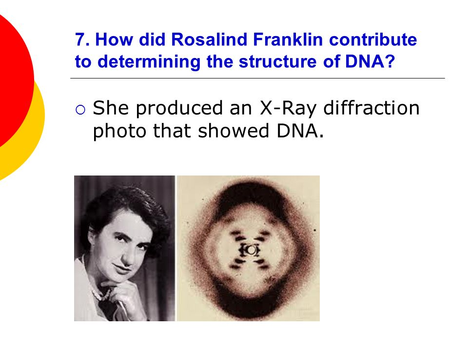 She produced an X-Ray diffraction photo that showed DNA.
