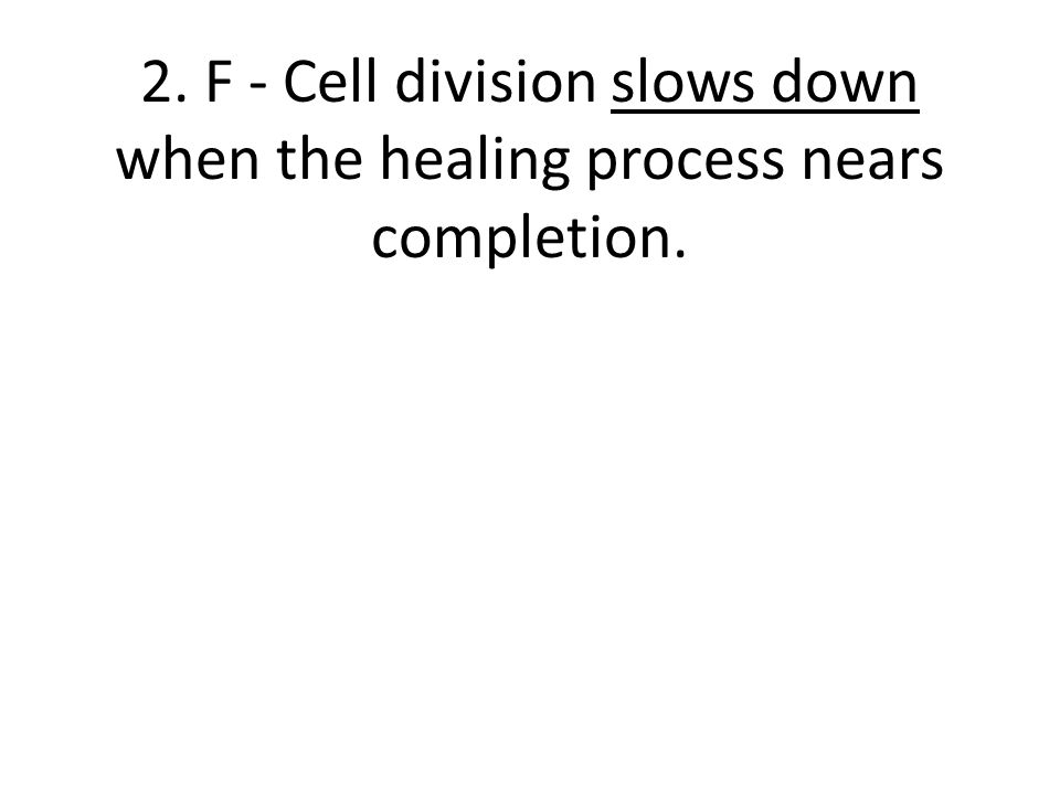 2. F - Cell division slows down when the healing process nears completion.