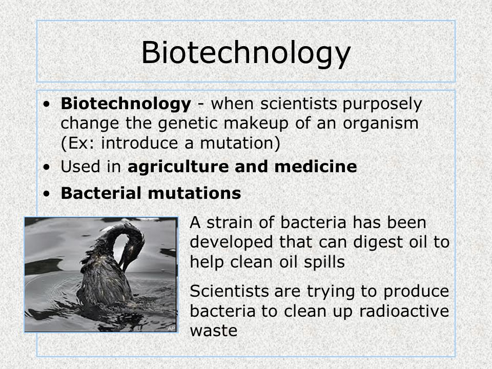 Biotechnology Biotechnology - when scientists purposely change the genetic makeup of an organism (Ex: introduce a mutation)