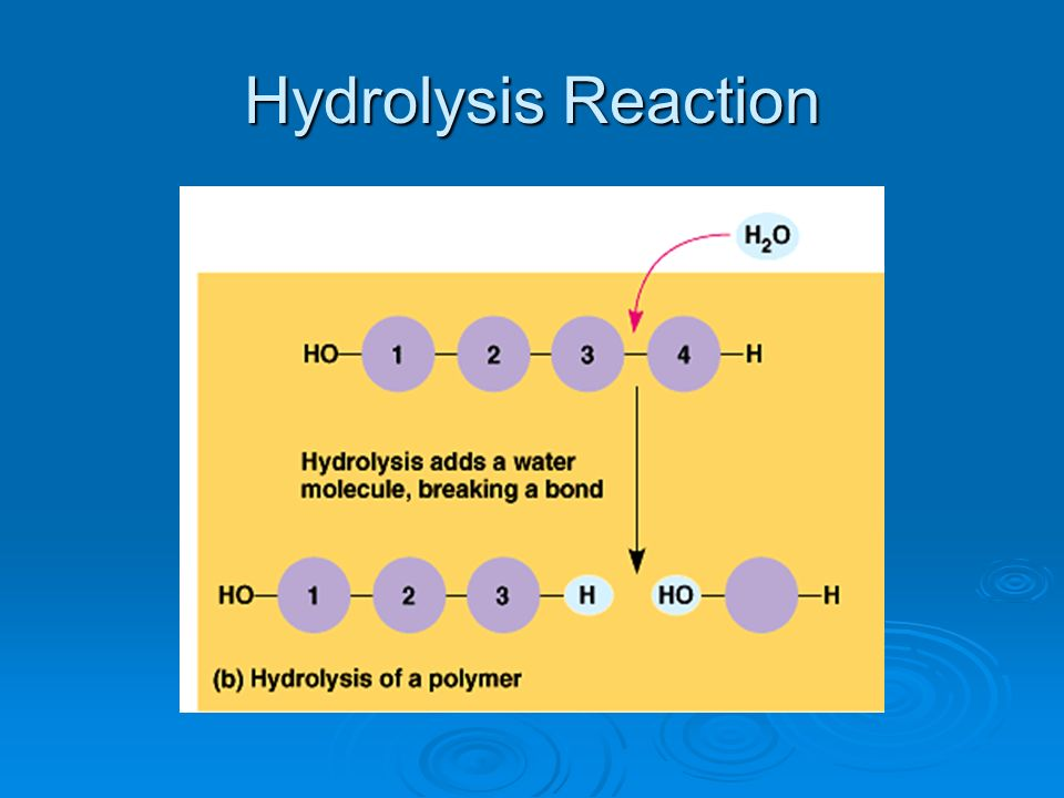Hydrolysis Reaction