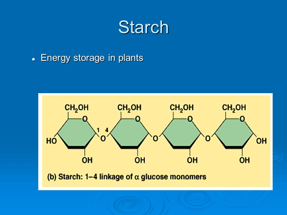 Starch Energy storage in plants