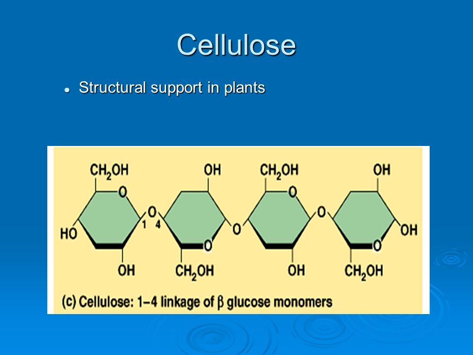 Cellulose Structural support in plants