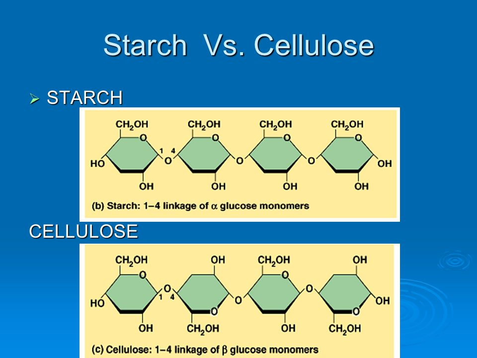 Starch Vs. Cellulose STARCH CELLULOSE