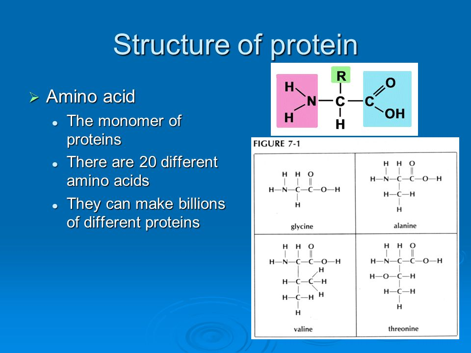 Structure of protein Amino acid The monomer of proteins