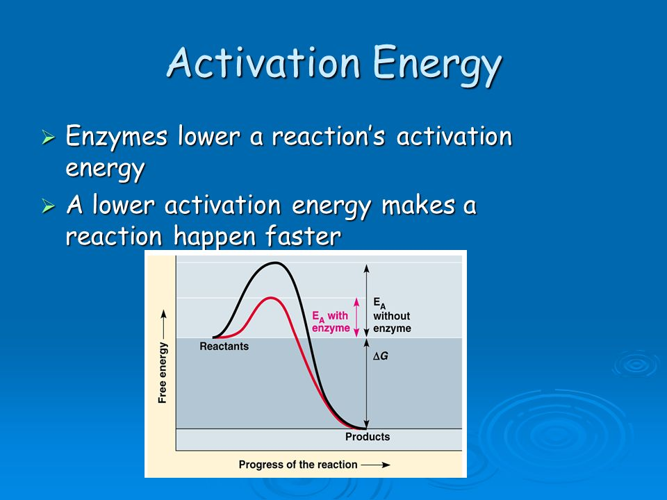 Activation Energy Enzymes lower a reaction's activation energy