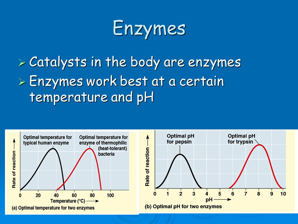 Enzymes Catalysts in the body are enzymes