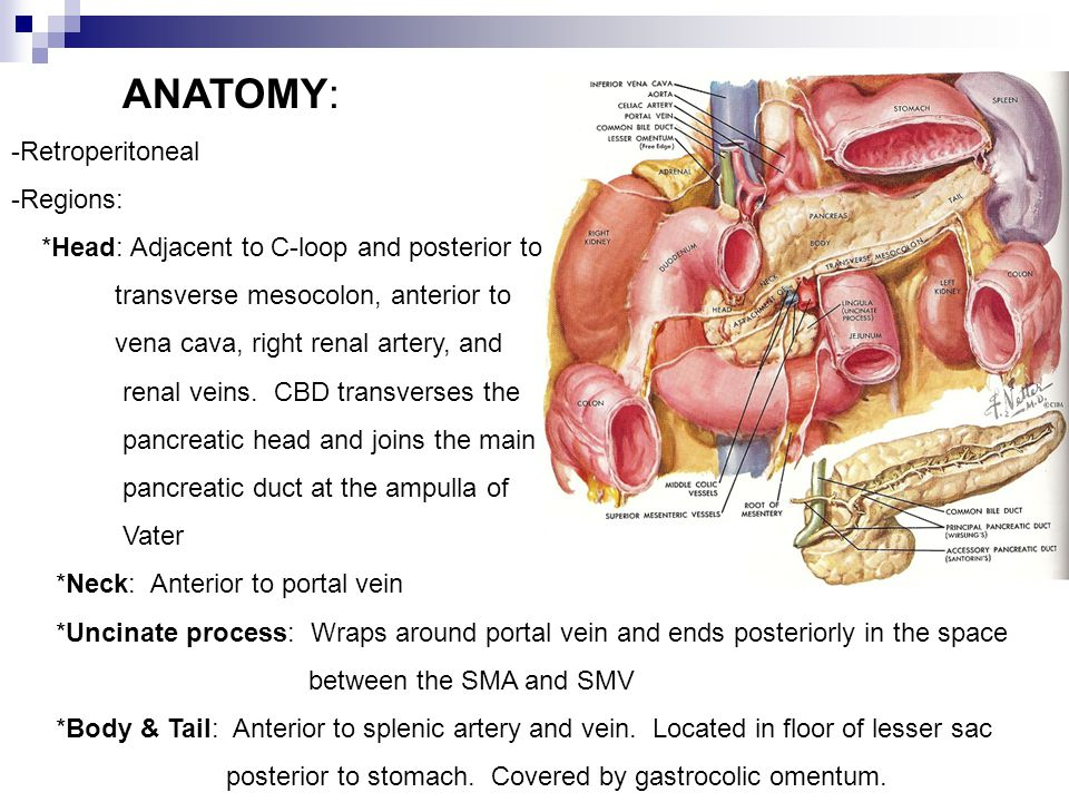 Pancreas Jr Basic Science Ppt Video Online Download