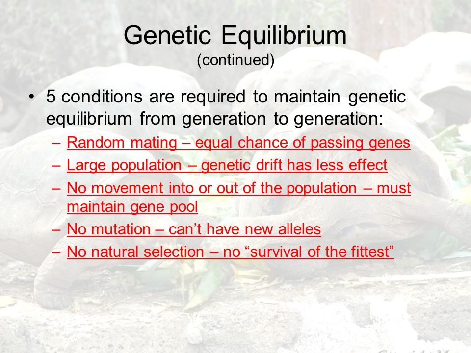 Genetic Equilibrium (continued)