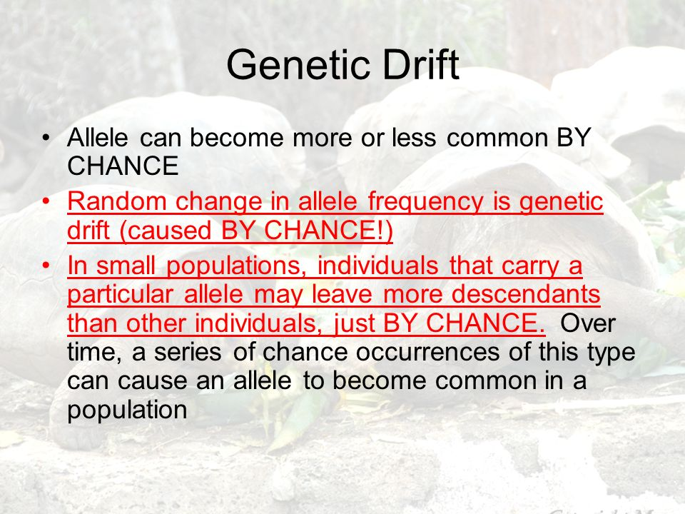 Genetic Drift Allele can become more or less common BY CHANCE
