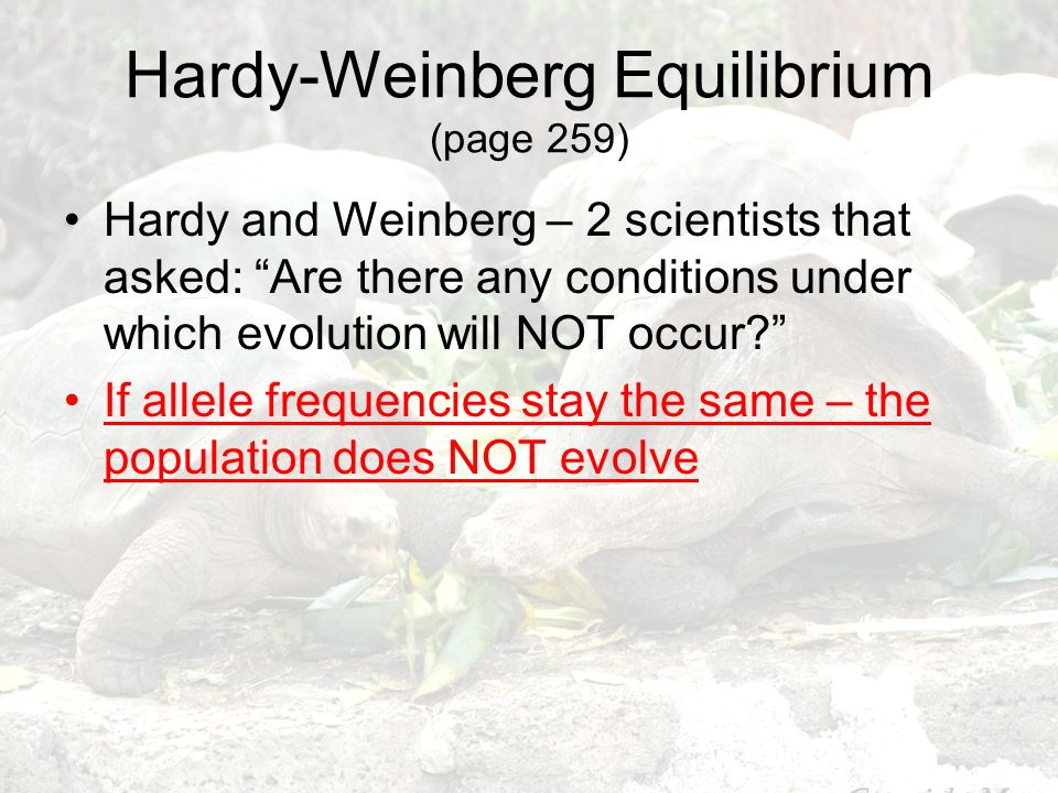 Hardy-Weinberg Equilibrium (page 259)