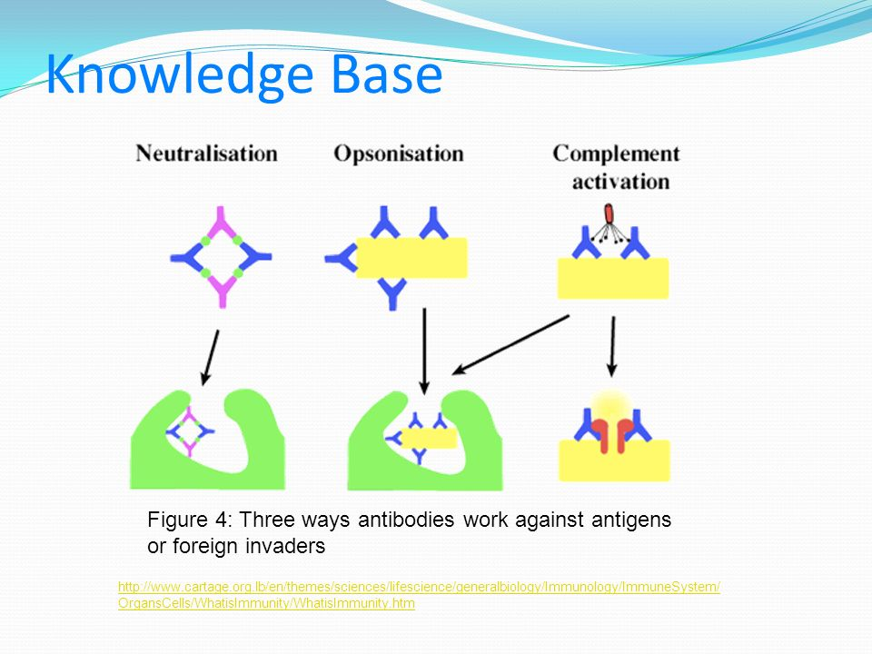 Knowledge Base Figure 4: Three ways antibodies work against antigens or foreign invaders.