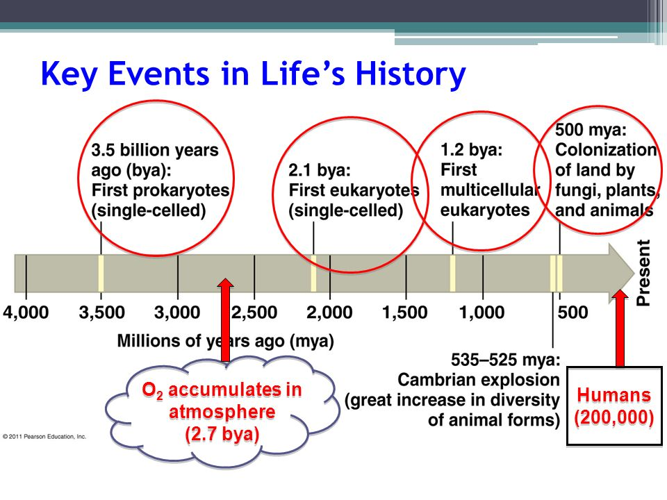 Key Events in Life's History