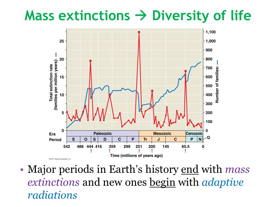 Mass extinctions  Diversity of life