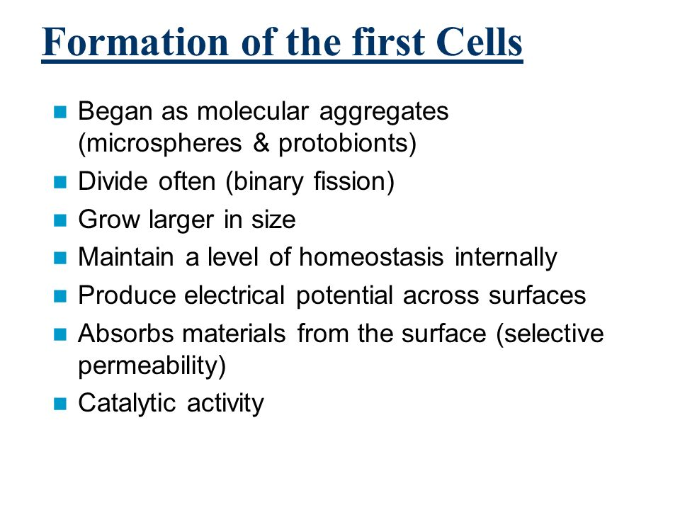 Formation of the first Cells