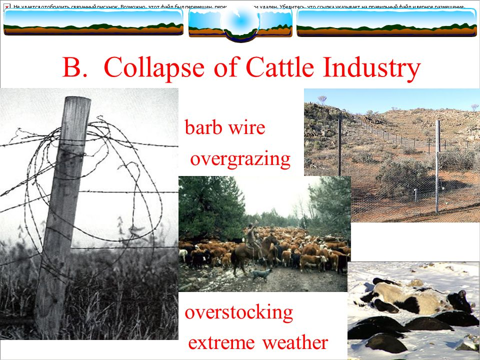 B. Collapse of Cattle Industry