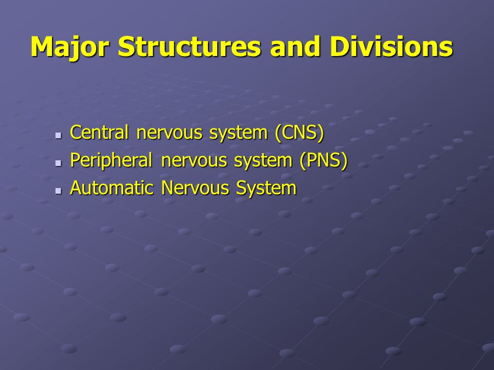Major Structures and Divisions