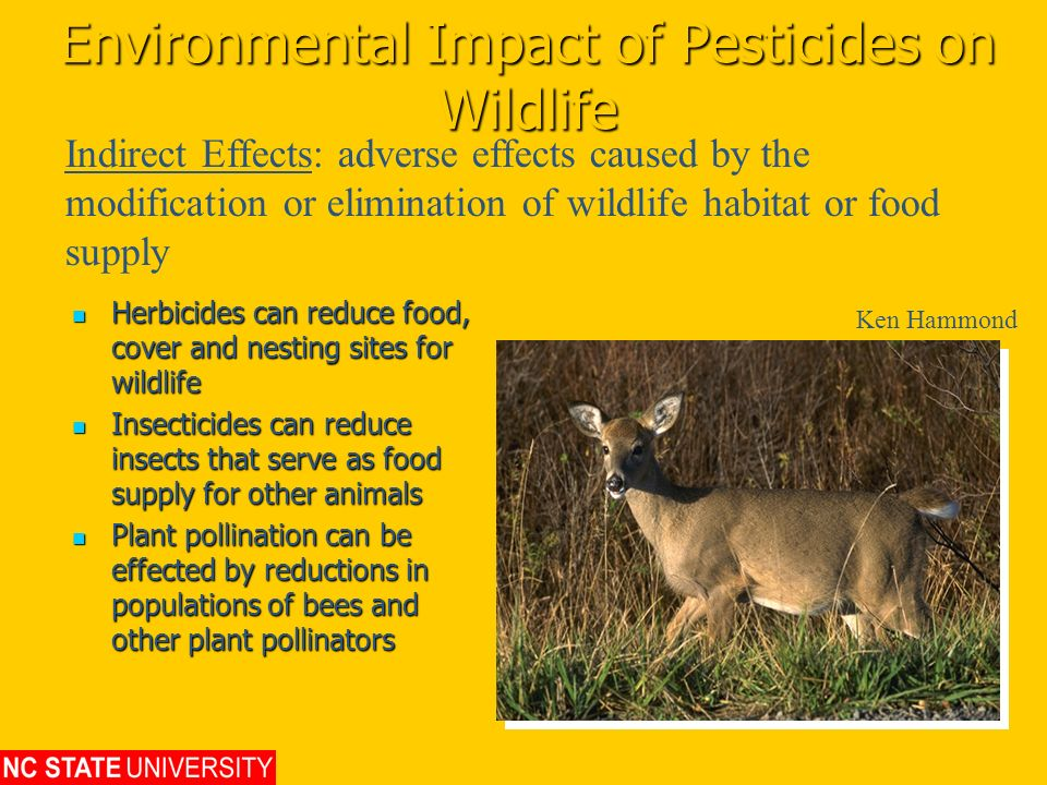Environmental Impact of Pesticides on Wildlife